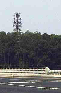 cell tower trees off highways disguised
