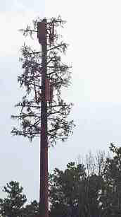 cell tower trees disguised as cell towers